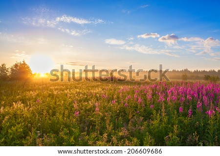 summer  rural landscape with the sunrise, a blossoming meadow and fog - stock photo