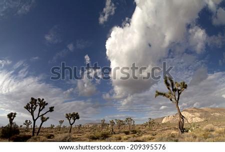 Summer scene in Joshua Tree National Park - stock photo