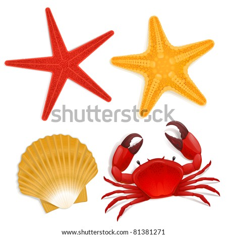 Summer sea life creatures, star fish, shell, red crab - stock photo