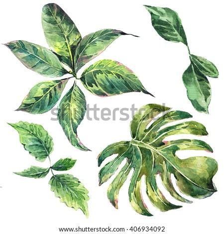 Summer set et of exotic watercolor green tropical leaves, botanical natural collection, isolated illustration - stock photo