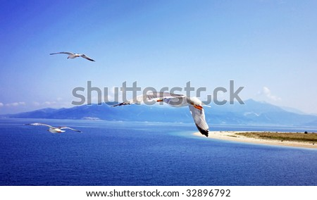 Summer sky, ocean and flying seagulls