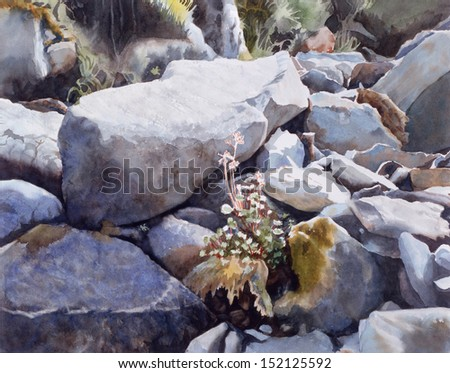 Summer Stream Bed.  Watercolor painting of dry stream in summer with rocks, moss, wild flowers,  and  textures.