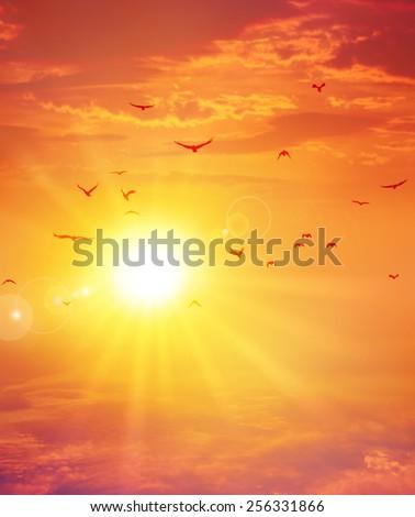 Summer sunset. Birds flight ahead the setting sun in a cloudy sky background - stock photo