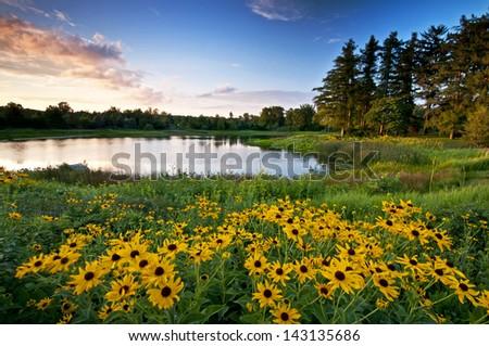 Summer Sunset Sunset light on Meadow Lake at The Morton Arboretum, Lisle, Illinois. - stock photo