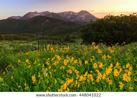 Summer sunset with wildflowers in the Wasatch Mountains, Utah, USA. - stock photo