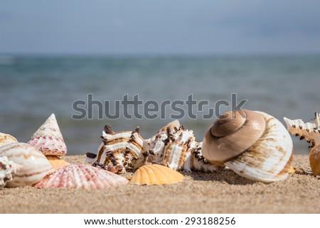 summer template with seashells on beach - stock photo