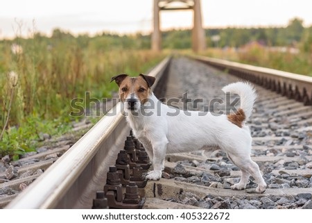 Summer travel adventure on a railroad with a cute dog