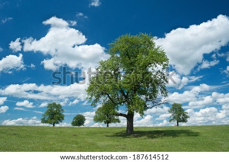 summer trees on the field with bright blu sky cloluds - stock photo