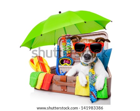 summer vacation dog in bag full of holiday items