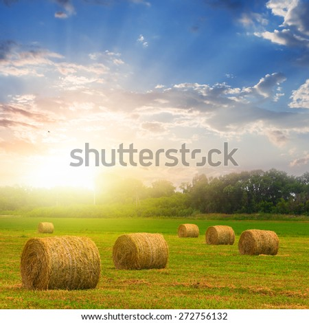 summer wheat field after a harvest - stock photo