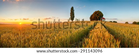 Summer wheat field panorama countryside, Agriculture - stock photo