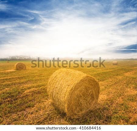 summer wheat field scene - stock photo