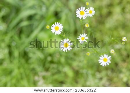 Summer wildflowers background/Wildflowers background texture - stock photo