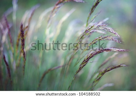 Summer wind in the grass - stock photo