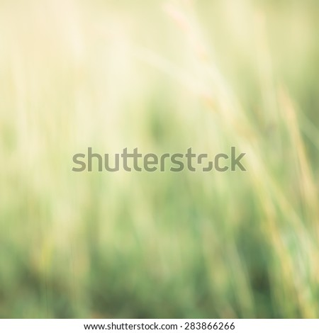 Summer wind in the grass.Abstract blurred nature background. - stock photo