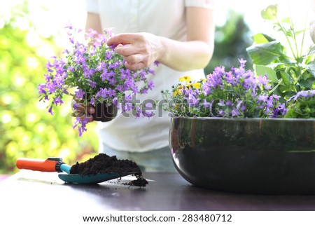 Summer work in the garden. Female plants in pot plants forming a beautiful composition flower - stock photo