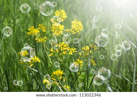 Summer  yellow flowers with green grass.Nature background - stock photo