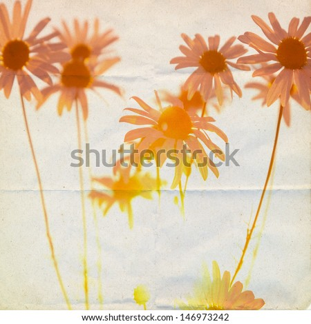 Summerly grunge background with chamomile  - stock photo