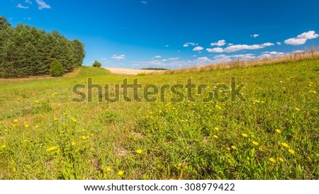 Summertime meadow under blue sky. Tranquil countryside at warm and sunny day. Polish rural landscape - stock photo