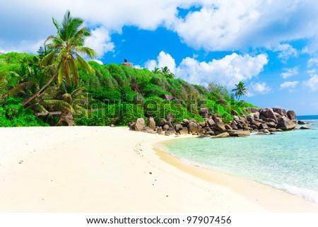 Summertime Palms Jungle - stock photo