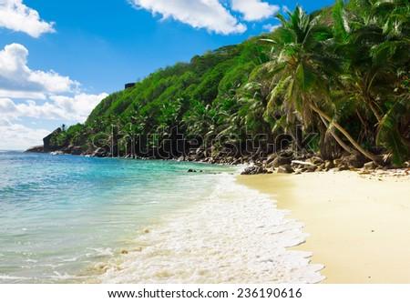 Summertime Shore Jungle  - stock photo
