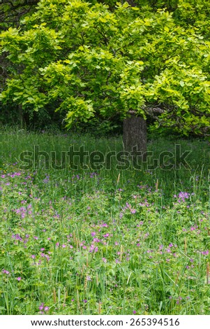 Summery floral meadow and a oak tree - stock photo