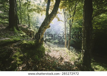 sun beam in green forest - stock photo