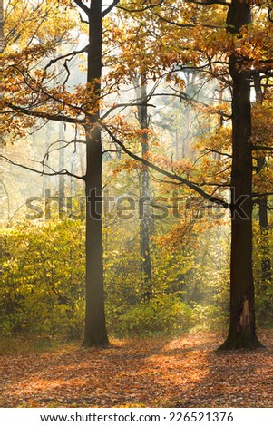 sun beam lit lawn in autumn forest in sunny day