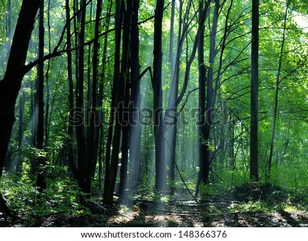 Sun beams burst through the forest canopy. Northern Woodlands, Michigan. - stock photo