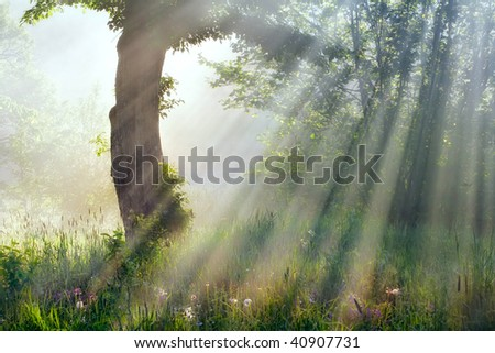 sun beams in fog - stock photo