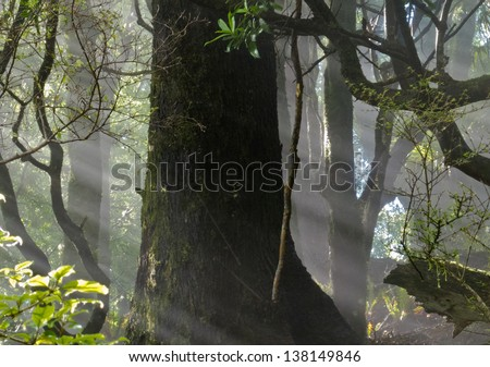 Sun beams of light penetrating dense lush green canopy of tropical rainforest jungle wilderness - stock photo