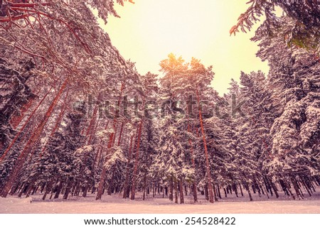 Sun between the clouds and little snowfall in the cold winter forest.  - stock photo