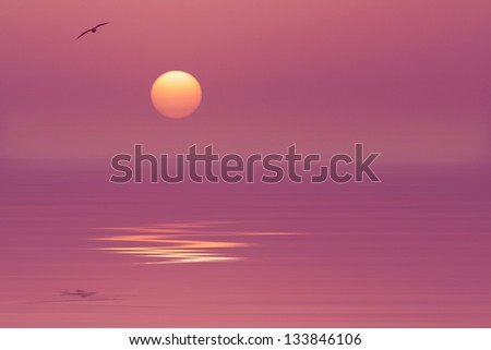 Sun,bird and reflection on the water - stock photo