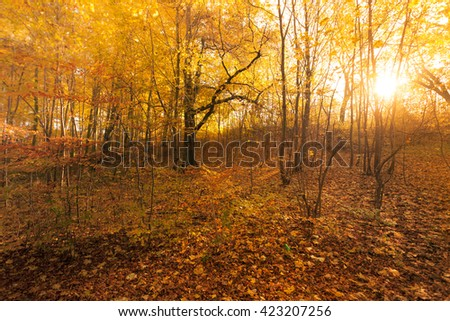 Sun breaking through leaves. Trees in autumnal park. Fall vegetation nature landscape concept.  - stock photo