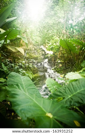 sun bursting through the tree canopy of a steaming tropical jungle - stock photo