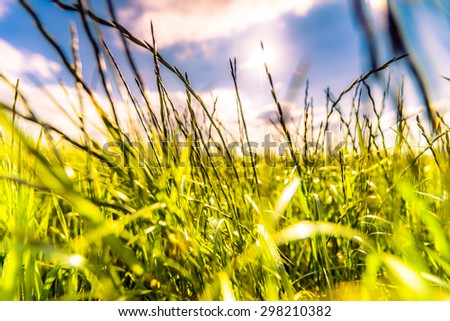 Sun comes out of cumulus clouds and illuminates a fields in the forest. Focus on the grass, image in the soft orange-purple toning - stock photo