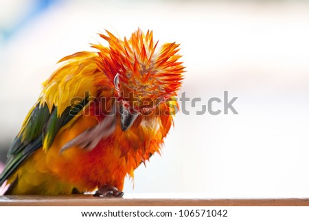 Angry Birds Stock Photos, Images, & Pictures | Shutterstock