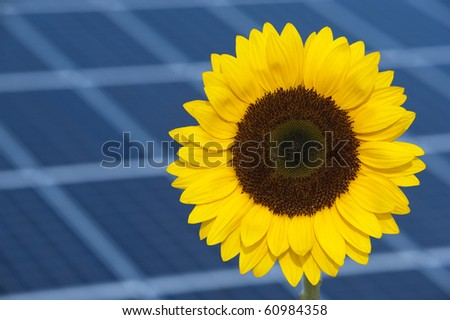 sun flower and solar cell as symbol for alternative energy - stock photo