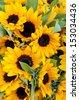 Sun Flowers - stock photo