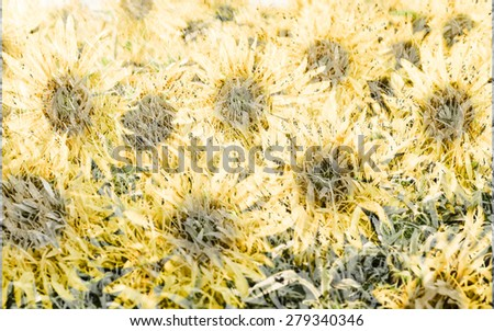 Sun flowers in mulberry paper texture style vintage for background soft focus. - stock photo