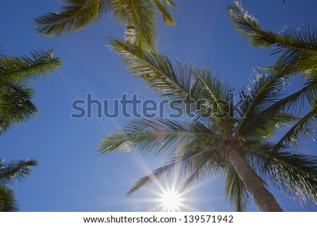 Sun gleaming through palm trees - stock photo