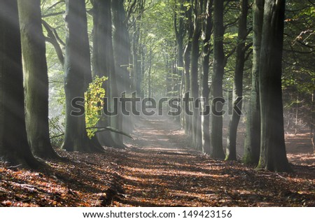 Sun in the forest in autumn