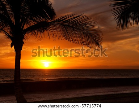 Sun is setting in the ocean, a palm tree silhouette in front - stock photo