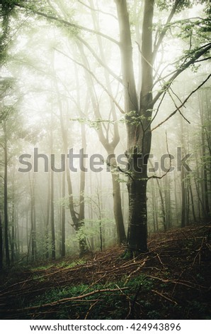 sun light in forest with tree and fog