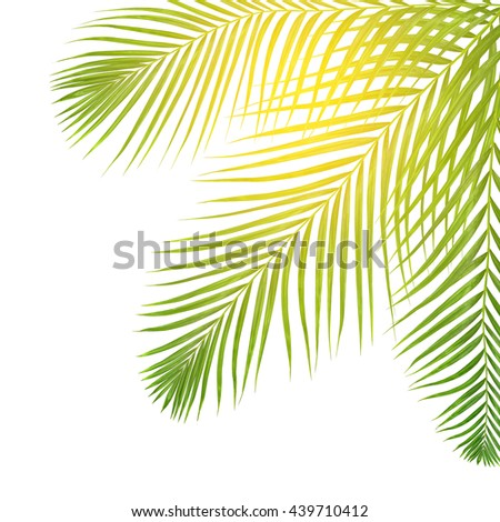 sun over green leaves of palm tree on white background