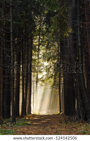 Sun rays crossing a misty forest photographed in an early autumn morning - the way to heaven - stock photo