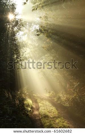 Sun rays falling on the path in the deciduous forest on a foggy autumn morning. - stock photo