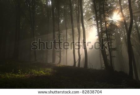 sun rays in a dark forest in autumn - stock photo