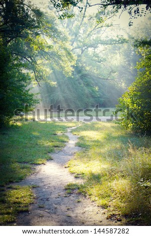 Sun rays in a forest. Made in Lobau, Austria - stock photo
