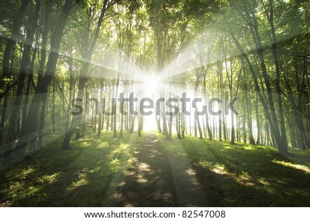 sun rays in a green forest in spring - stock photo